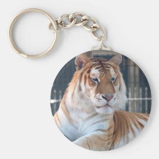Tigre de oro del Tabby en el parque zoológico 1 de Llavero Redondo Tipo Pin