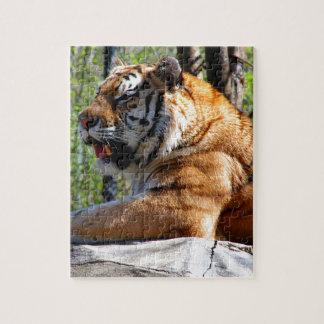 Tigre de reclinación puzzle