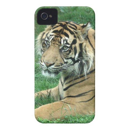 Tigre de Sumatra en el iPhone 4 Barely There iPhone 4 Funda
