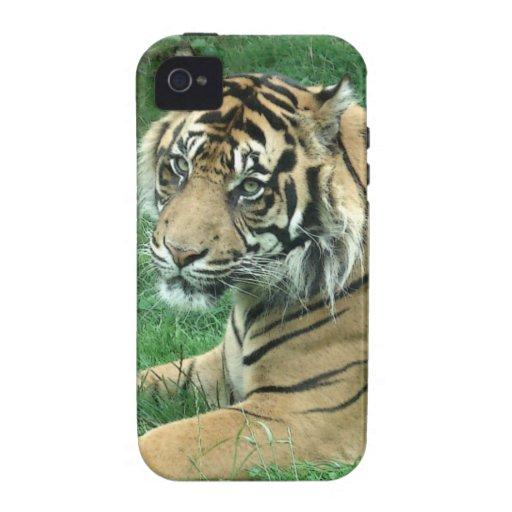Tigre de Sumatra en la casamata del iPhone 4 dura iPhone 4/4S Funda