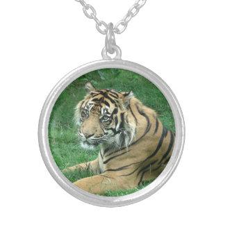Tigre de Sumatra en un collar de plata