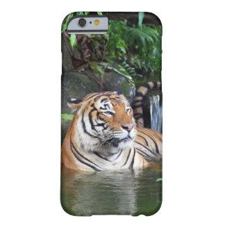 Tigre de Sumatra Funda De iPhone 6 Barely There