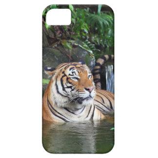 Tigre de Sumatra iPhone 5 Carcasas