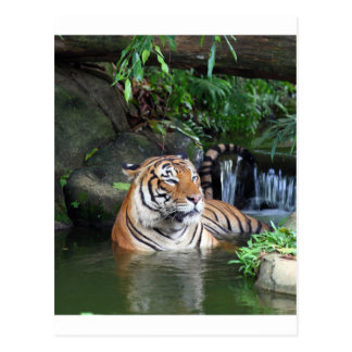 Tigre de Sumatra Postal