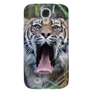 Tigre de Sumatran del hambre del amor