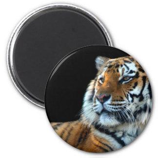 Tigre de Sumatran Imán Redondo 5 Cm