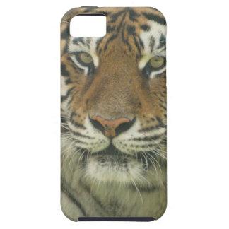 Tigre de Sumatran iPhone 5 Case-Mate Protector