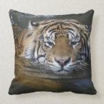 Tigre de Sumatran, sumatrae del Tigris del Cojín