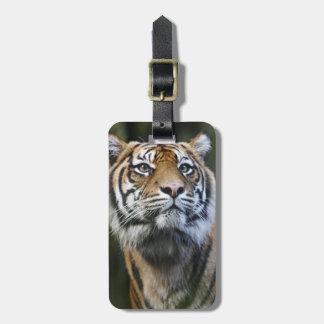 Tigre de Sumatran (sumatrae del Tigris del Panther Etiquetas Maleta