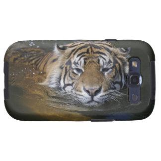 Tigre de Sumatran, sumatrae del Tigris del Panther Samsung Galaxy S3 Coberturas