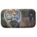 Tigre de Sumatran (sumatrae del Tigris del Panther Samsung Galaxy S3 Carcasa