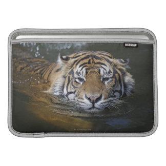Tigre de Sumatran, sumatrae del Tigris del Panther Fundas Macbook Air