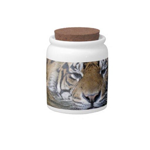 Tigre de Sumatran, sumatrae del Tigris del Panther Plato Para Caramelo