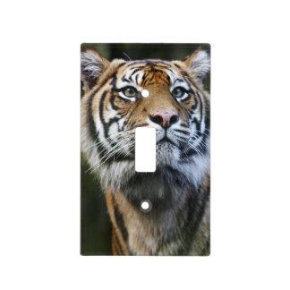 Tigre de Sumatran (sumatrae del Tigris del Panther Cubiertas Para Interruptor