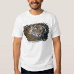 Tigre de Sumatran, sumatrae del Tigris del Poleras