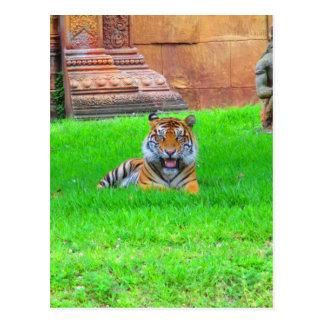 Tigre de Sumatran Tarjeta Postal