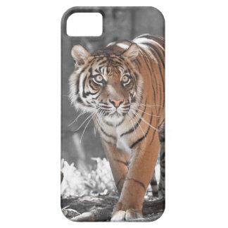 Tigre de vagabundeo iPhone 5 Case-Mate fundas