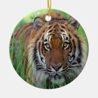Tigre Ornamento De Navidad