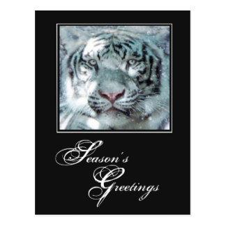 Tigre del blanco puro de los saludos de la tarjetas postales