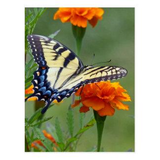 Tigre del este femenino amarillo Swallowtail Tarjetas Postales