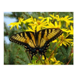 Tigre del este Swallowtail en margaritas amarillas Tarjeta Postal