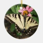 Tigre del este Swallowtail Ornatos