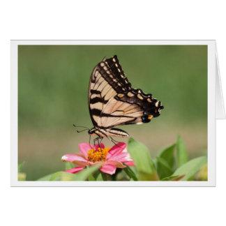Tigre del este Swallowtail Tarjeta De Felicitación