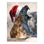 Tigre del navidad postales