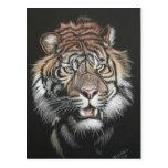 Tigre del rugido en tablero del rasguño postal