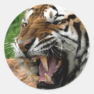 Tigre del rugido pegatina