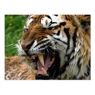 Tigre del rugido postal
