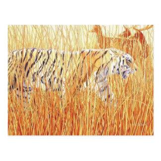 """Tigre del """"terreno común"""" en hierba postales"""