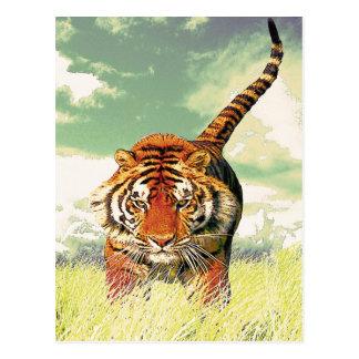 ¡Tigre del tigre! Postal