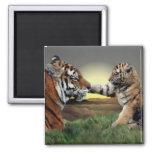Tigre e imán de Cub