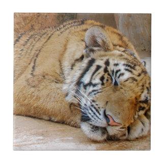 Tigre el dormir tejas  ceramicas