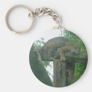 Tigre el dormir en el árbol, bosque, naturaleza, llavero redondo tipo pin