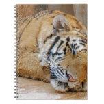 Tigre el dormir libreta
