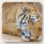 Tigre el dormir posavasos