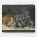 ¿Tigre el dormir? Tapete De Ratón