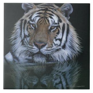 Tigre en agua azulejo cuadrado grande