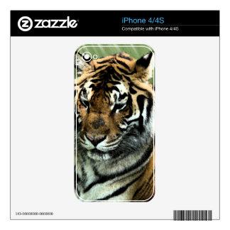 Tigre en descanso calcomanías para el iPhone 4S