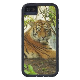 Tigre en el bosque iPhone 5 Case-Mate protectores