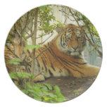 Tigre en el bosque plato
