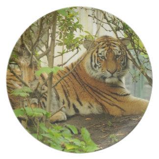 Tigre en el bosque plato de cena