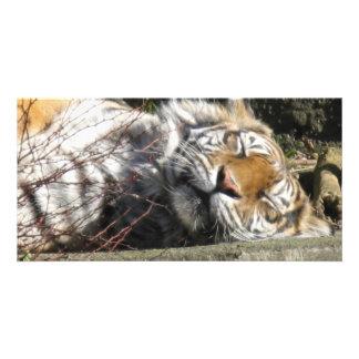 Tigre en el Sun Tarjeta Fotográfica