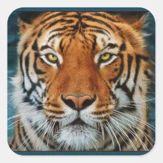 Tigre en fotografía del agua pegatina cuadrada