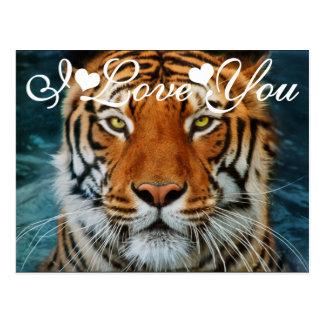 Tigre en fotografía del agua te amo tarjetas postales