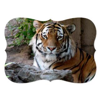 Tigre en Myanmar Invitación 12,7 X 17,8 Cm