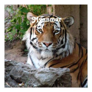 Tigre en Myanmar Invitación 13,3 Cm X 13,3cm