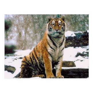 Tigre en nieve postal